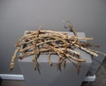 Plenty of Wood (2007). Cottonwood twigs.
