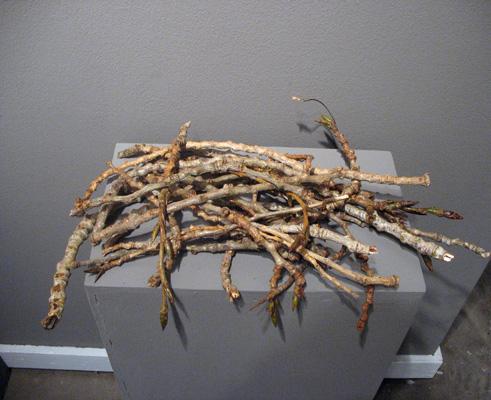 Plenty of Wood (2007). Cottonwood twigs.